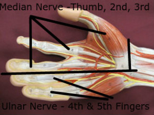 Carpal tunnel, ulnar tunnel, and TOS